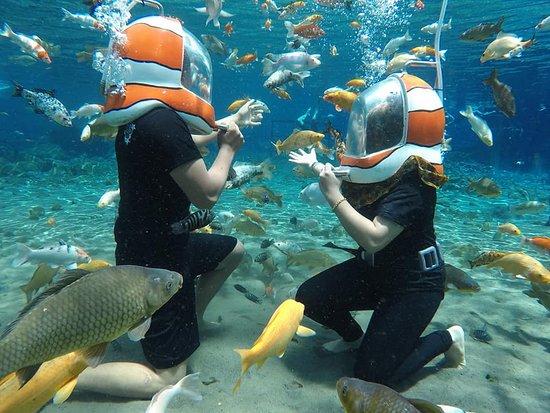 Wisata Underwater Umbul Ponggok Klaten